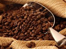 Ngành sản xuất cà phê tại đất nước Ấn Độ