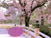 Những thắc mắc khi đi du học tại nước Nhật Bản