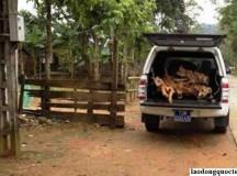 Kỷ luật lãnh đạo dùng xe công chở gỗ lậu