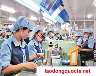 Những trường hợp lao động đi XKLD Đài Loan bị chấm dứt hợp đồng và phải về nước